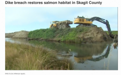 King 5 video of Dike Breach with excavators at work
